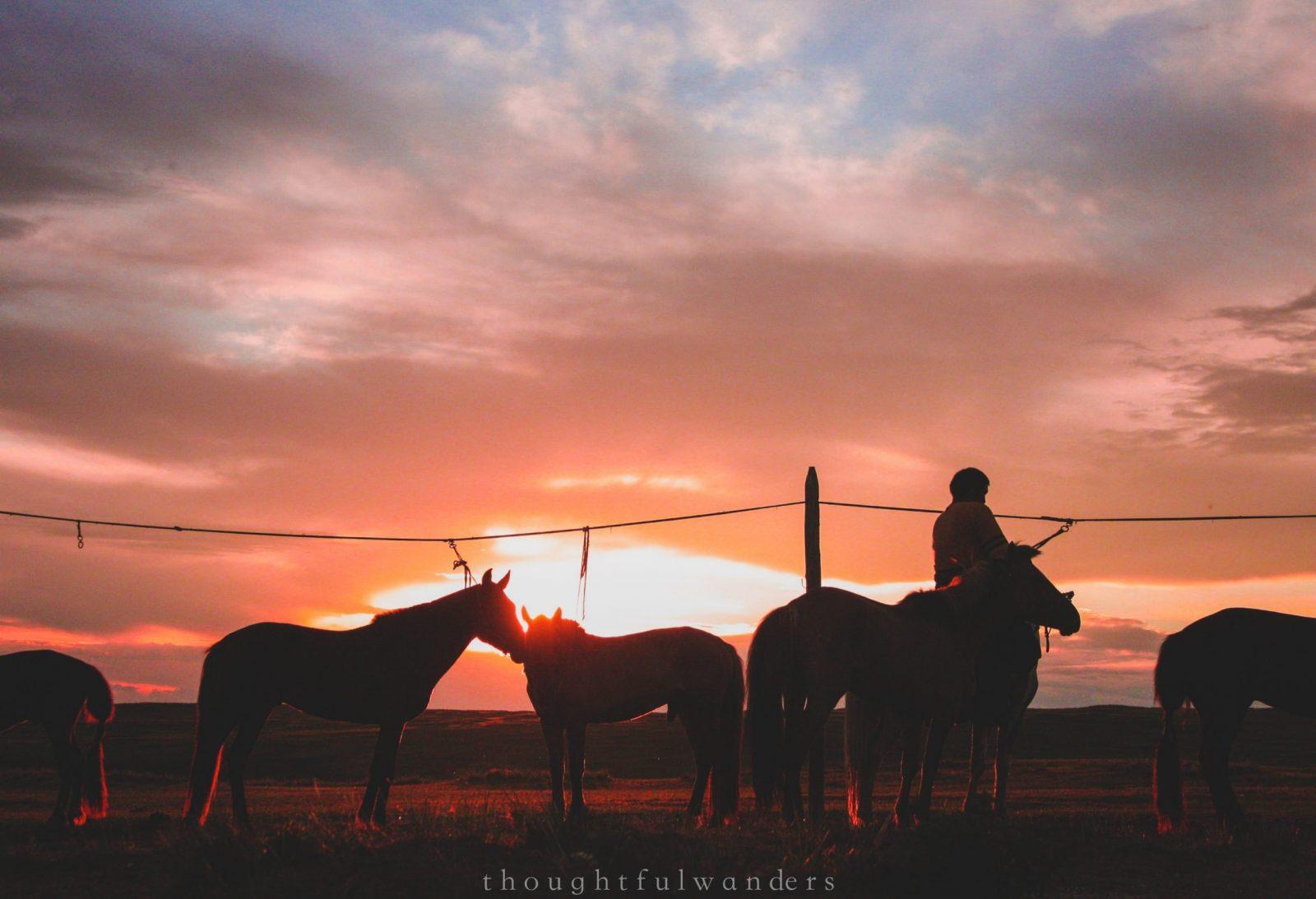sunset mongolian nomad horses